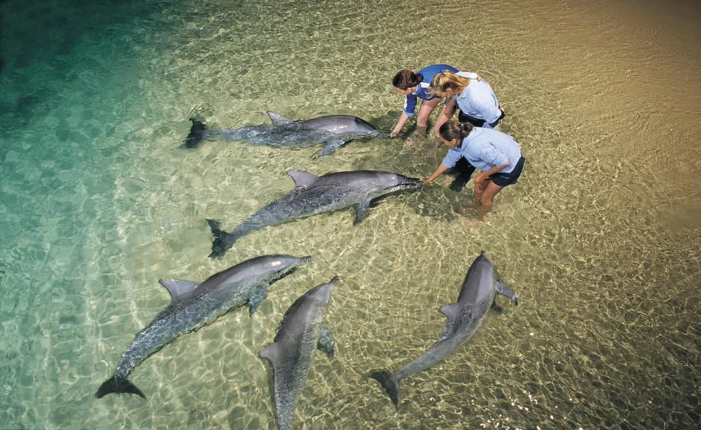 dolphin_feeding_9362