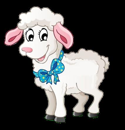 mouton_tiram_58