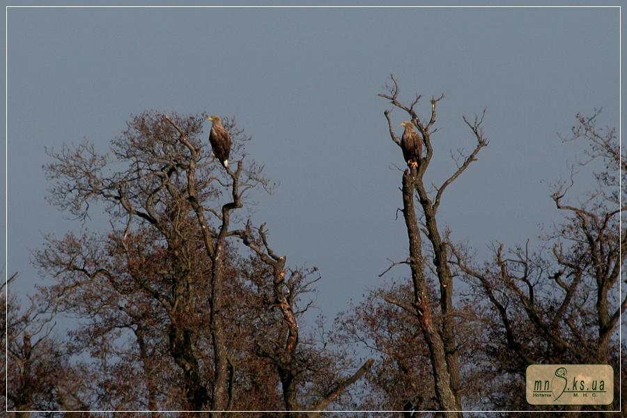 Орлани після ночівлі зустрічають світанок