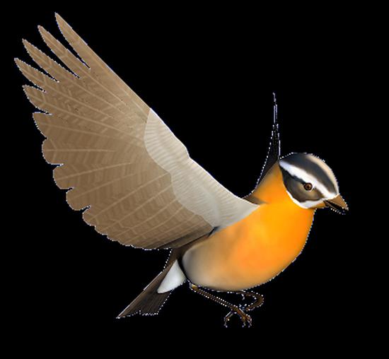 tubes_oiseaux_tiram_81
