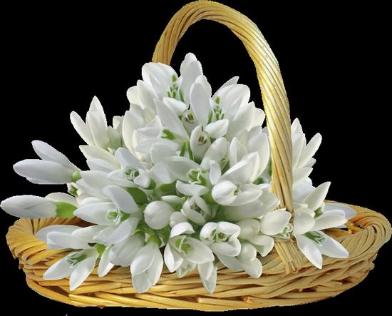 tubes_fleurs_tiram_43