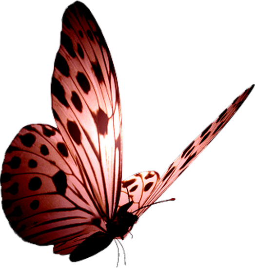 tubes_papillon_tiram_269