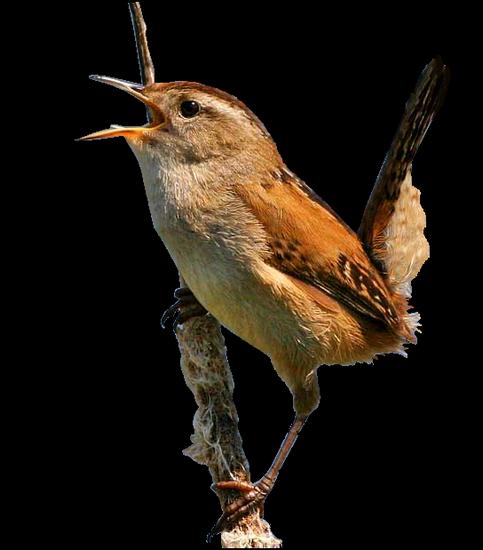 tubes_oiseaux_tiram_43