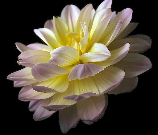 tubes_fleurs_tiram_638
