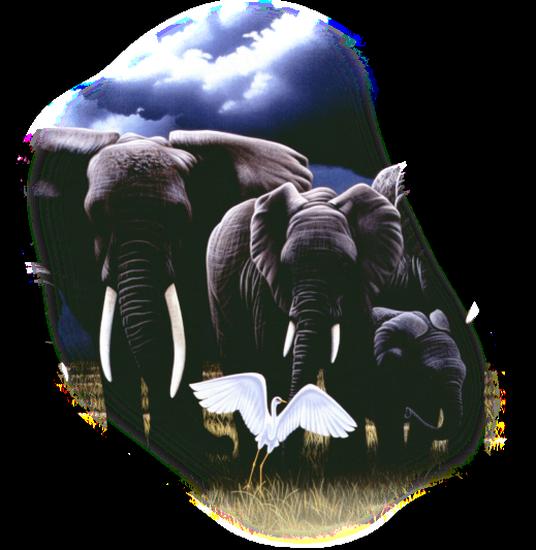 tubes_elephants_tiram_399