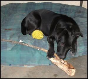 Tiki Pup