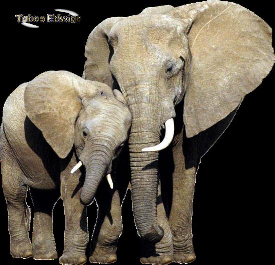 tubes_elephants_tiram_106