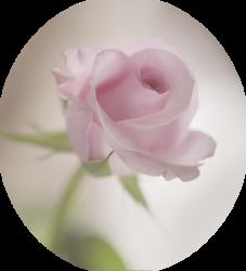 tubes_fleurs_saint_valentin_tiram_136