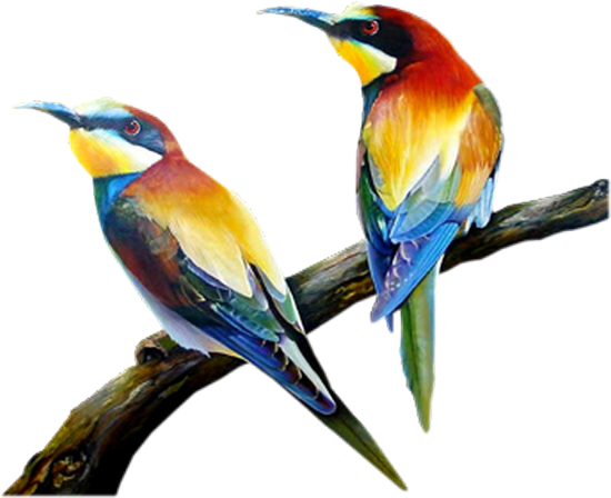 tubes_oiseaux_tiram_195