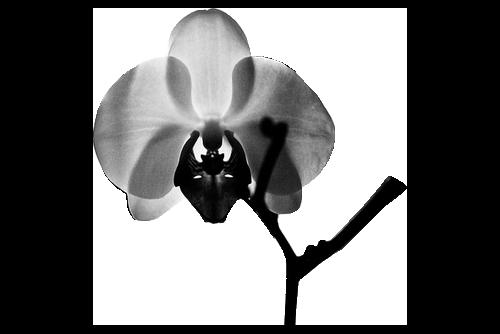 tubes_fleurs_tiram_942