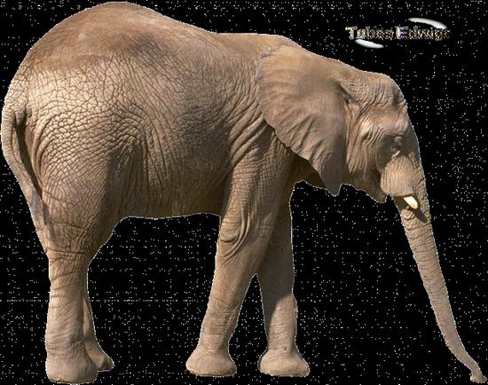 tubes_elephants_tiram_110