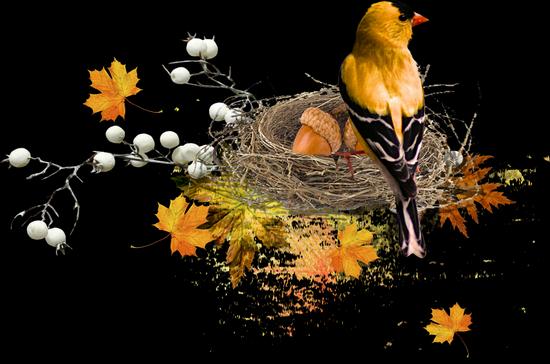 tubes_oiseaux_tiram_45