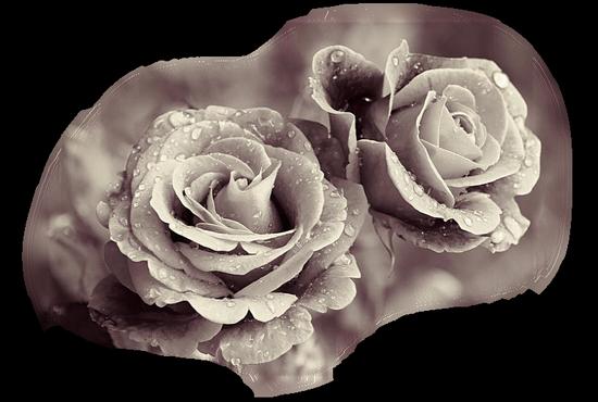 tubes_fleurs_tiram_259