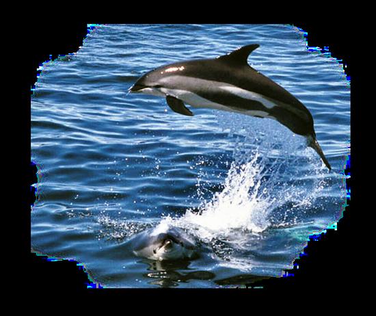 tubes_dauphins_tiram_107
