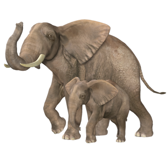 tubes_elephants_tiram_87