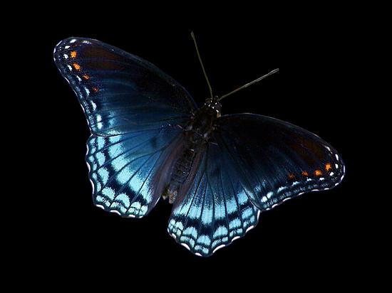 tubes_papillon_tiram_294