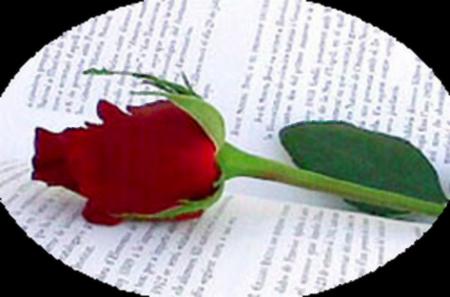 tubes_fleurs_saint_valentin_tiram_156
