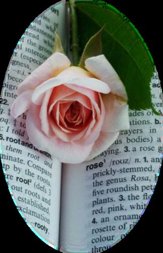tubes_fleurs_saint_valentin_tiram_65