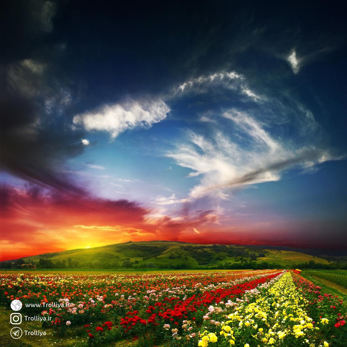 دانلود والپیپر دشت گل | flower land