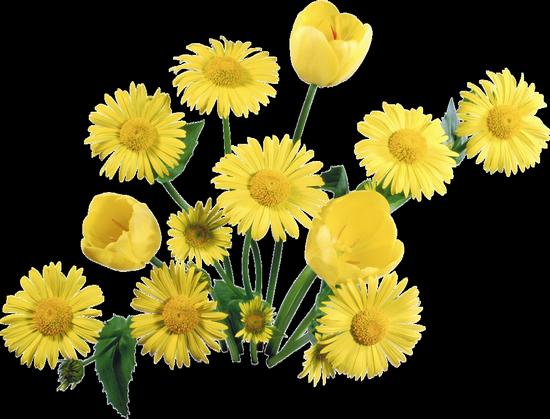 fleurs_paques_tiram_272