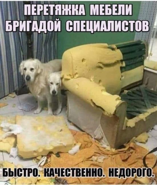1539117913_drunkcow_net_foto_prikoly_9