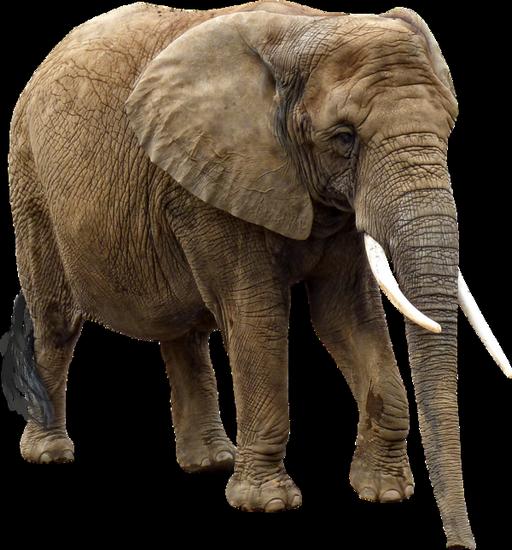 tubes_elephants_tiram_241