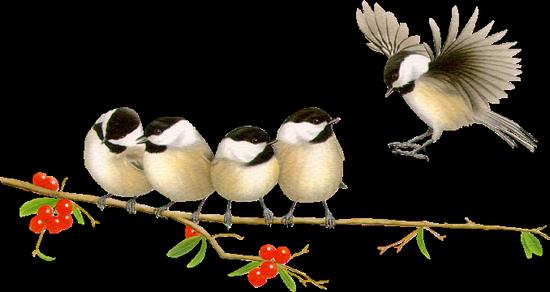 tubes_oiseaux_tiram_172