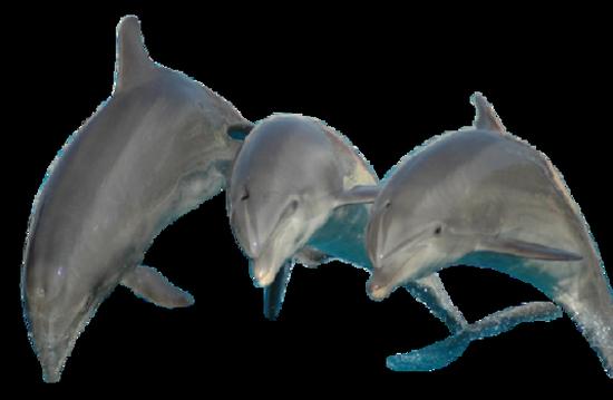 tubes_dauphins_tiram_195