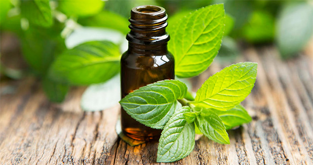 essential_oils_mint_bottle
