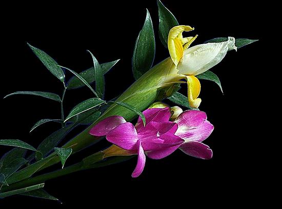 tubes_fleurs_tiram_372