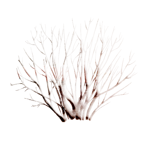 tubes-nature-noel-268