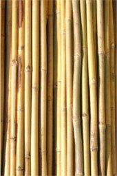 Caña de bambú, tutores de bambú, tutor para plantones de olivo