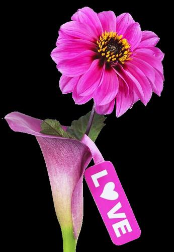 tubes_fleurs_saint_valentin_tiram_162