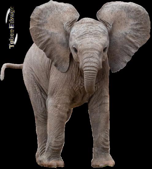 tubes_elephants_tiram_105