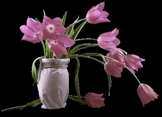 tubes_fleurs_tiram_254