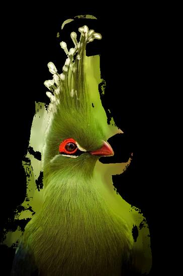 tubes_oiseaux_tiram_175