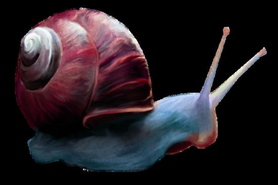 tubes_escargots_tiram_28