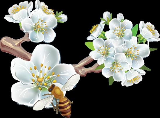 tubes_fleurs_tiram_167