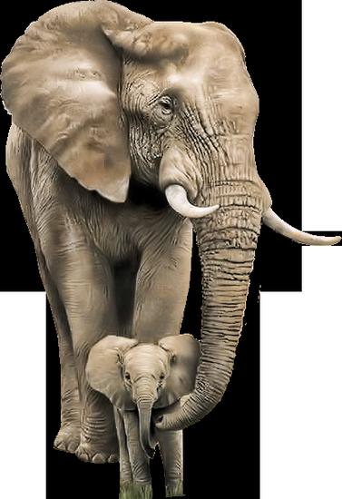 tubes_elephants_tiram_126