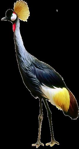 tubes_oiseaux_tiram_136