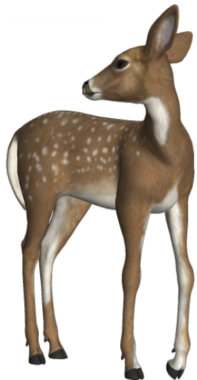 animaux-noel-tiram-64