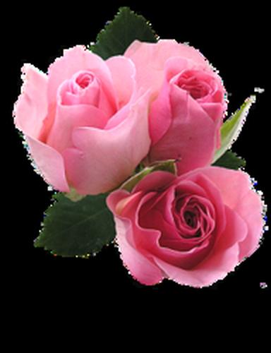 tubes_fleurs_saint_valentin_tiram_19