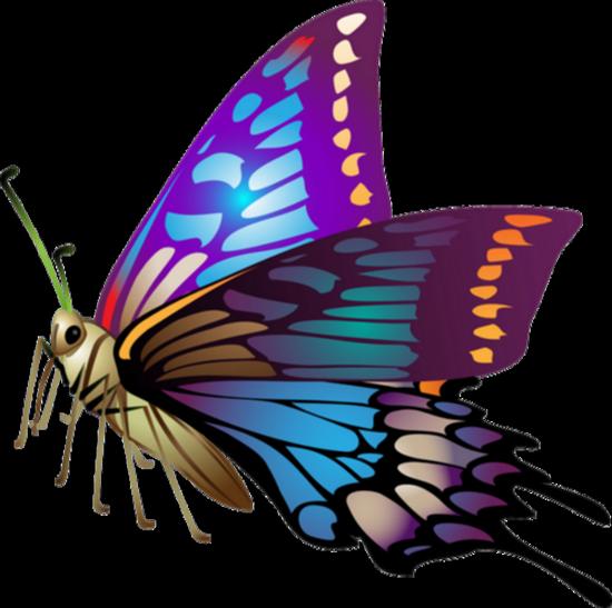 tubes_papillon_tiram_252