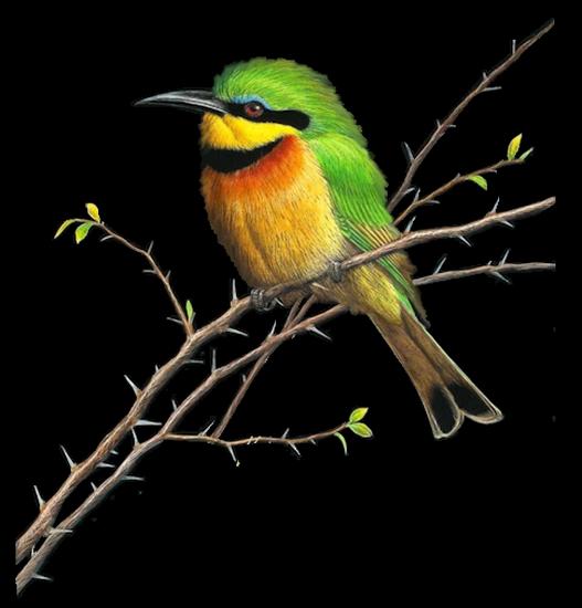 tubes_oiseaux_tiram_120