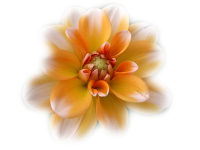 tubes_fleurs_tiram_707