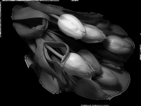 tubes_fleurs_tiram_844