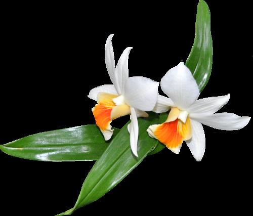 fleurs_paques_tiram_188