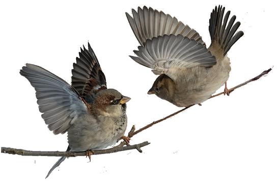 tubes_oiseaux_tiram_184