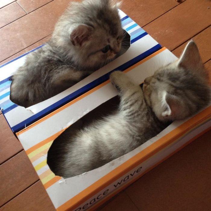 Gatos que cabem em qualquer lugar
