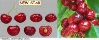 Tipos de cereza: New Star